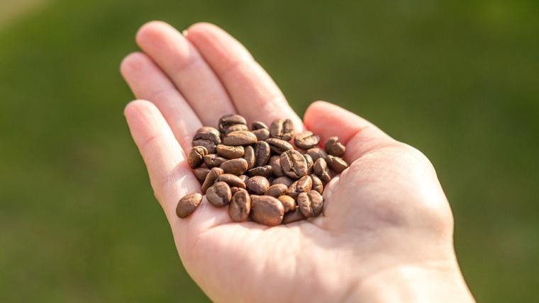 手のひらに乗ったコーヒー豆